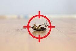 orgainc pest control auckland