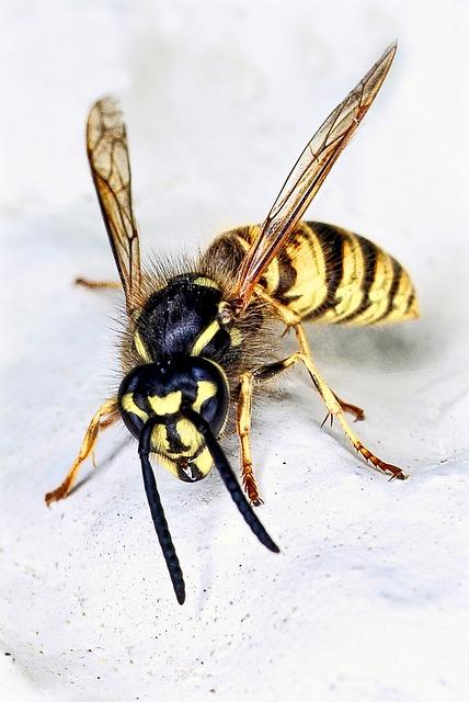 wasp exterminator auckland
